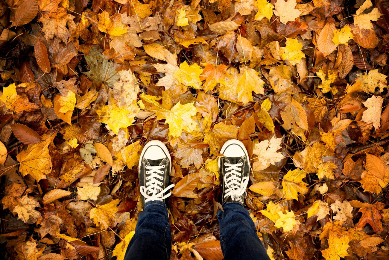 Lauren Bath - Converse shoes on Autumn Leaves in Quebec Canada