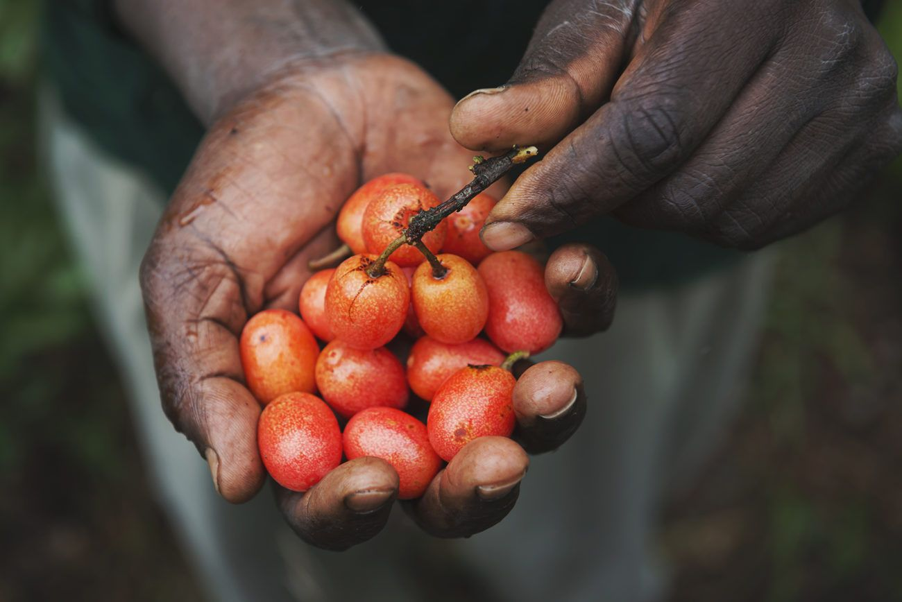 Lauren Bath - Fruit From The Trees, Zimbabwe Africa