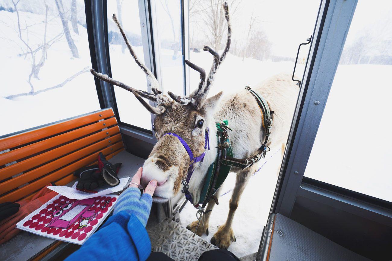 Lauren Bath - Reindeer Nose Wildlife Photography Niseko Village. Hokkaido Japan